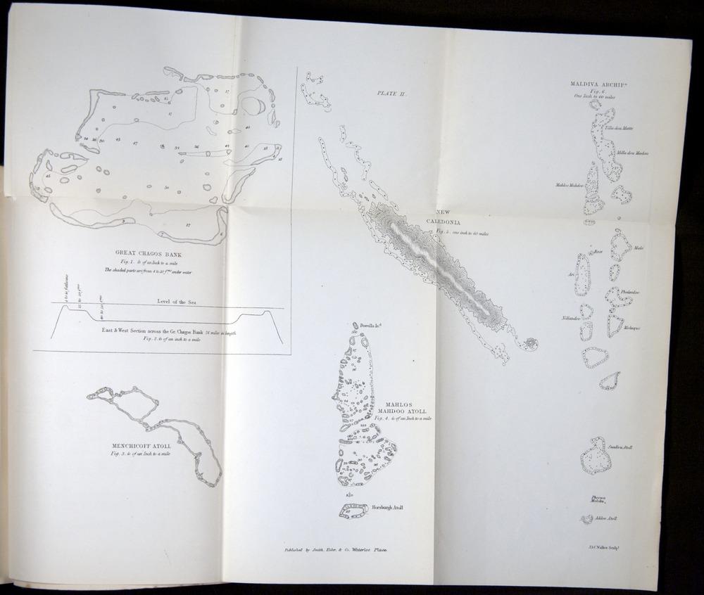 Image of Darwin-F275-1874-zzz-af3s