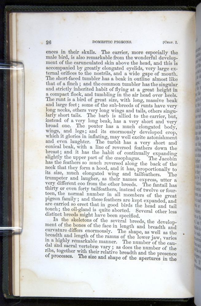 Image of Darwin-F377-1860-00026