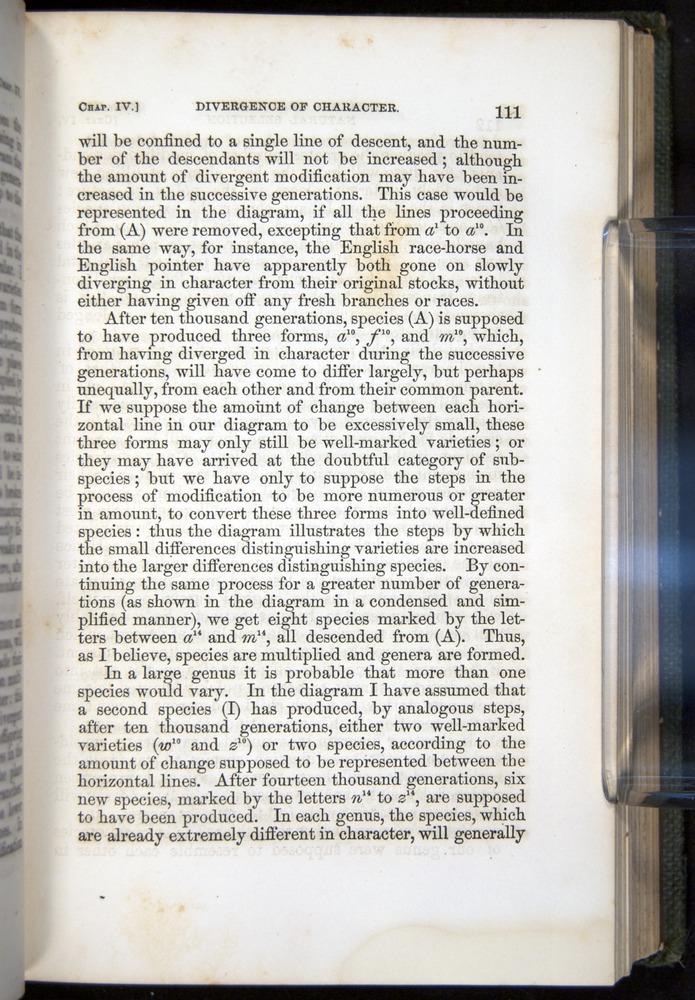 Image of Darwin-F377-1860-00111
