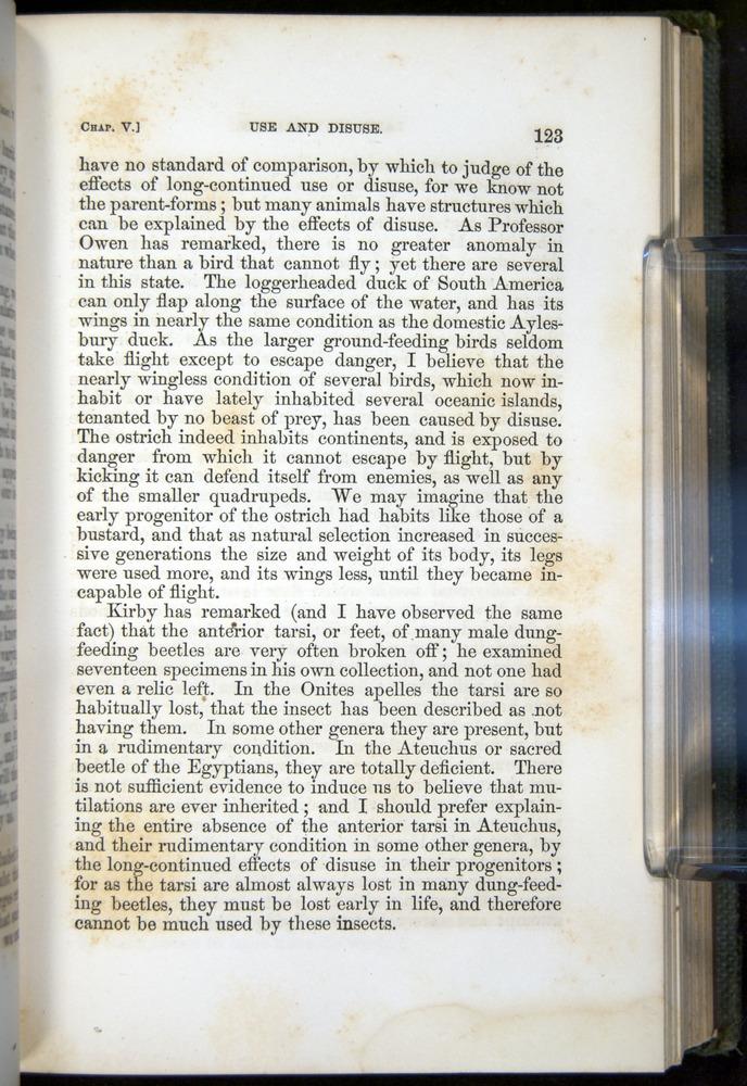 Image of Darwin-F377-1860-00123