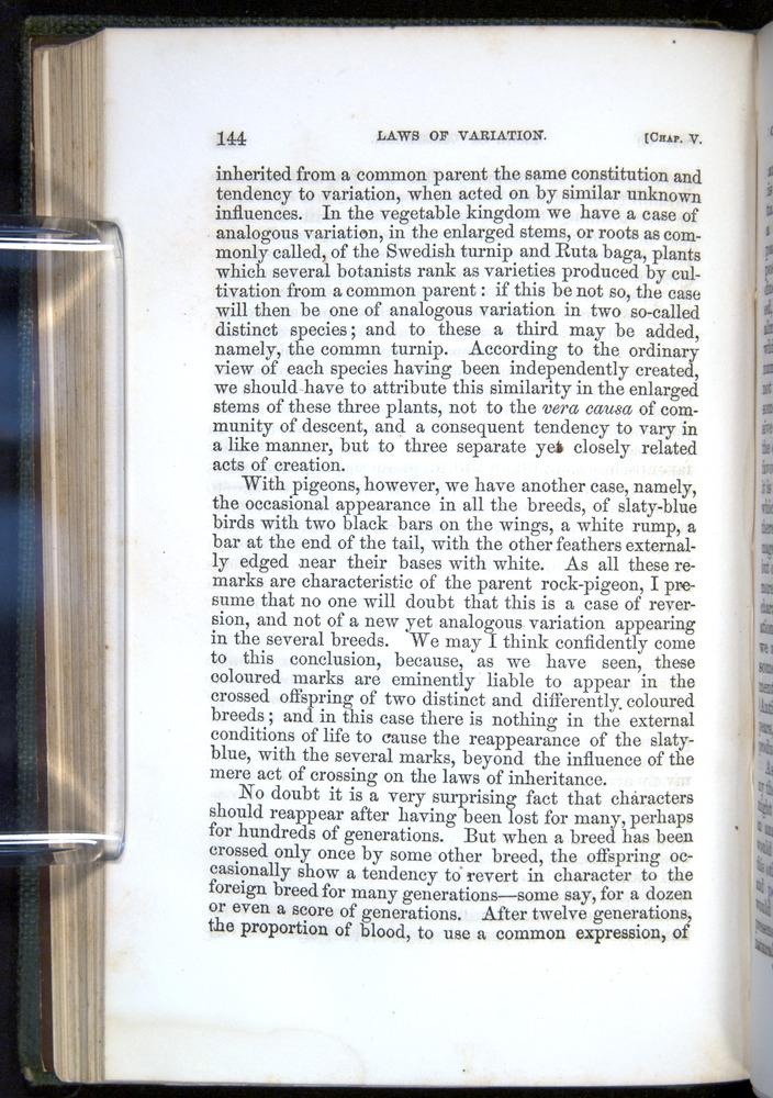 Image of Darwin-F377-1860-00144