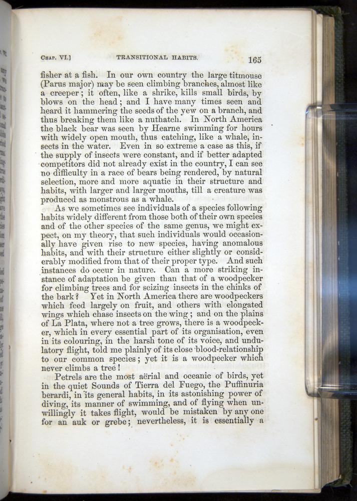 Image of Darwin-F377-1860-00165