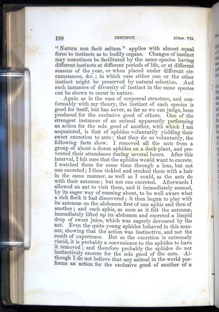 Image of Darwin-F377-1860-00188