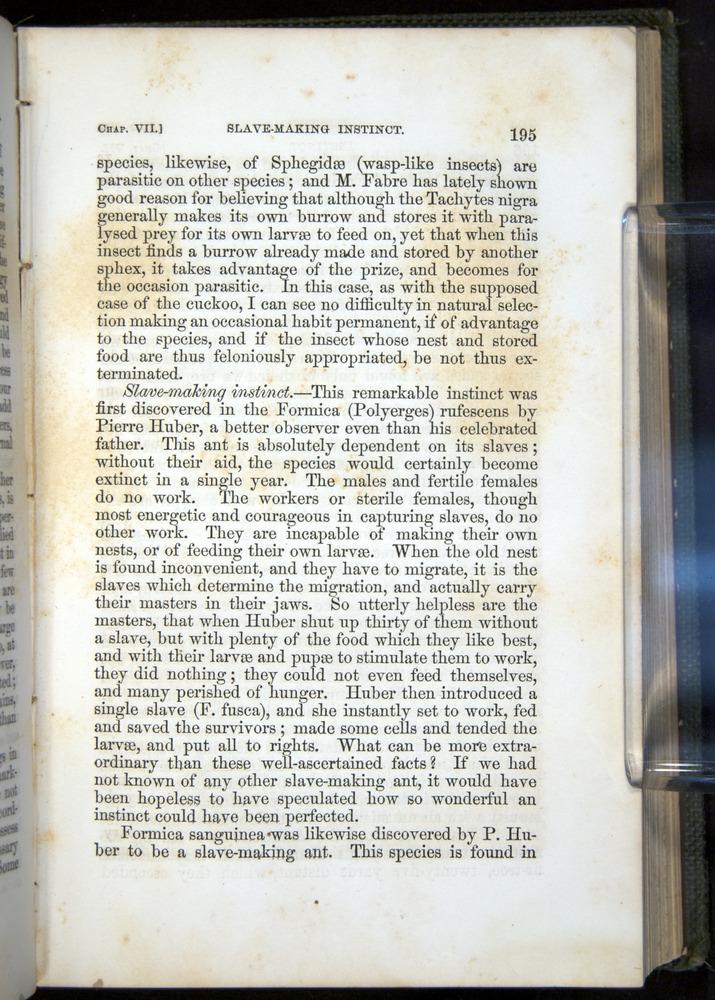 Image of Darwin-F377-1860-00195