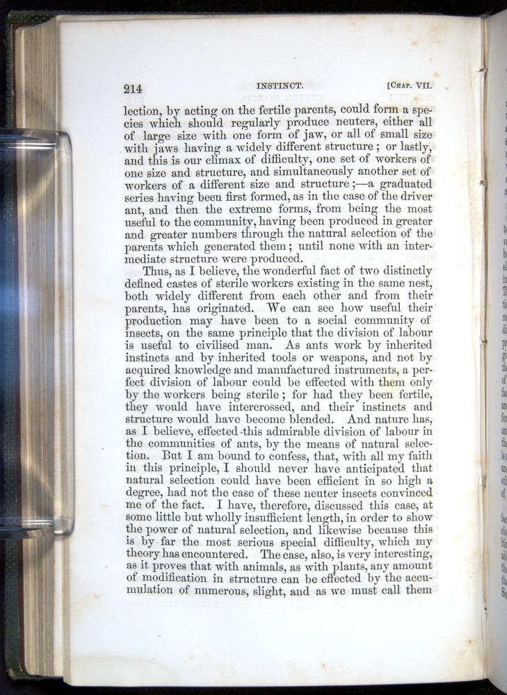 Image of Darwin-F377-1860-00214