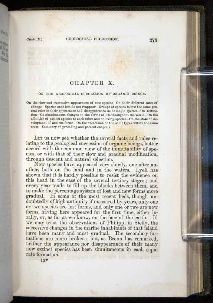 Image of Darwin-F377-1860-00273