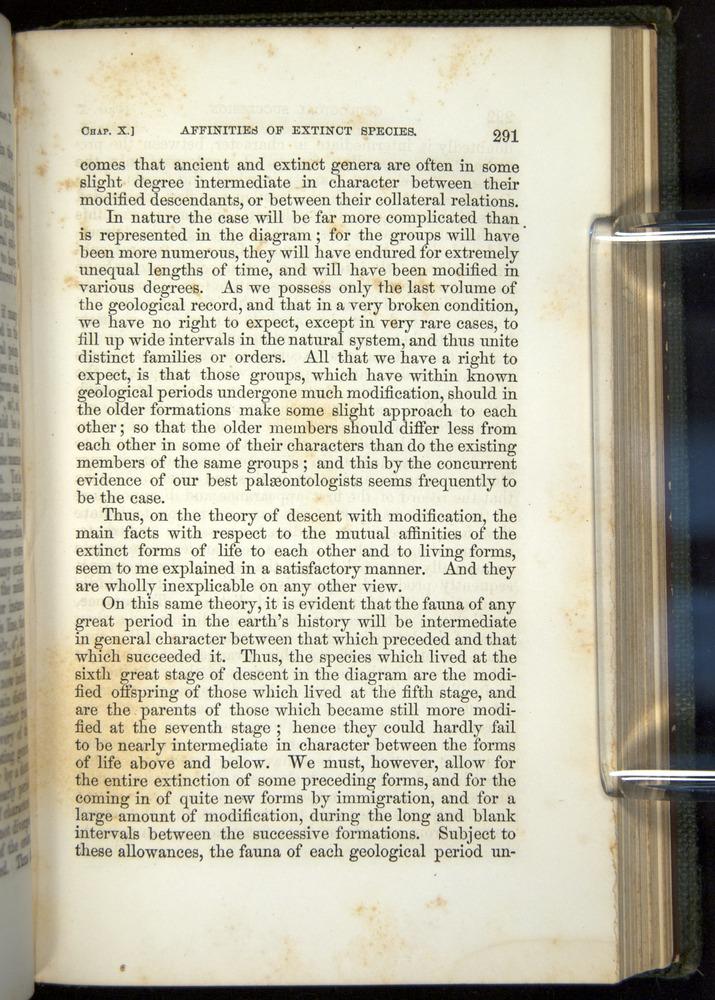 Image of Darwin-F377-1860-00291