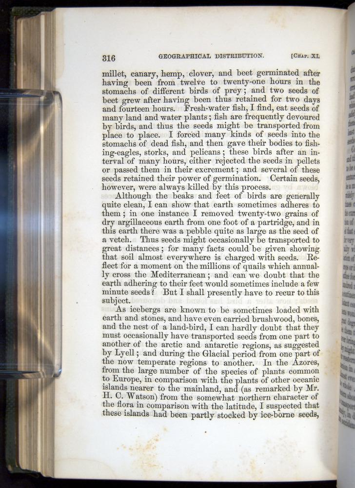 Image of Darwin-F377-1860-00316
