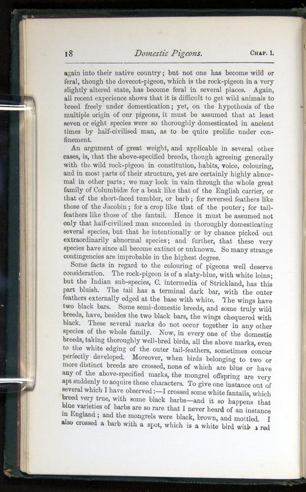 Image of Darwin-F401-1876-018