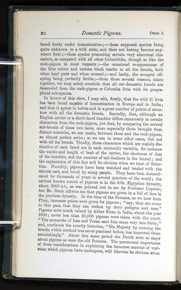 Image of Darwin-F401-1876-020