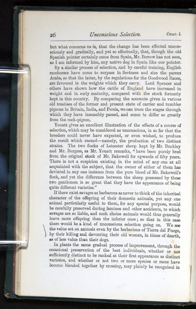 Image of Darwin-F401-1876-026