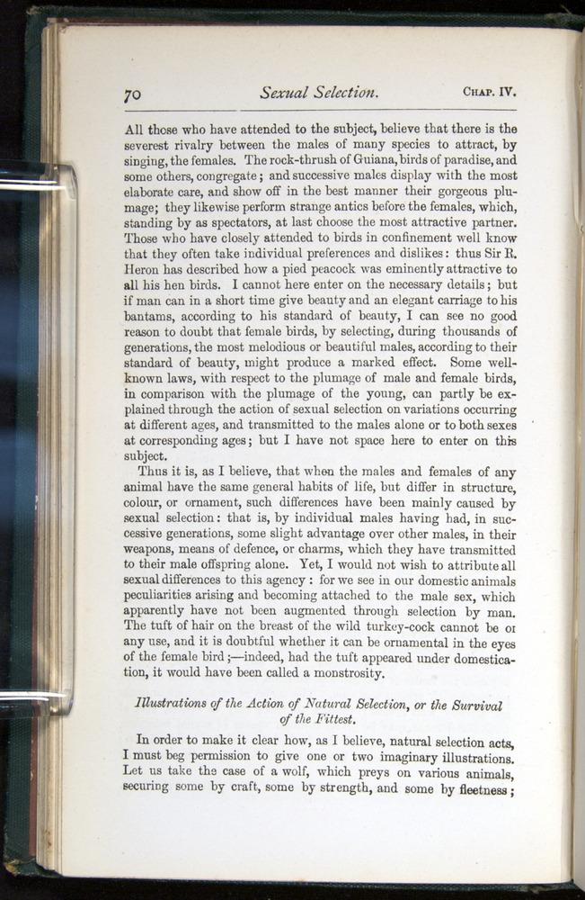 Image of Darwin-F401-1876-070