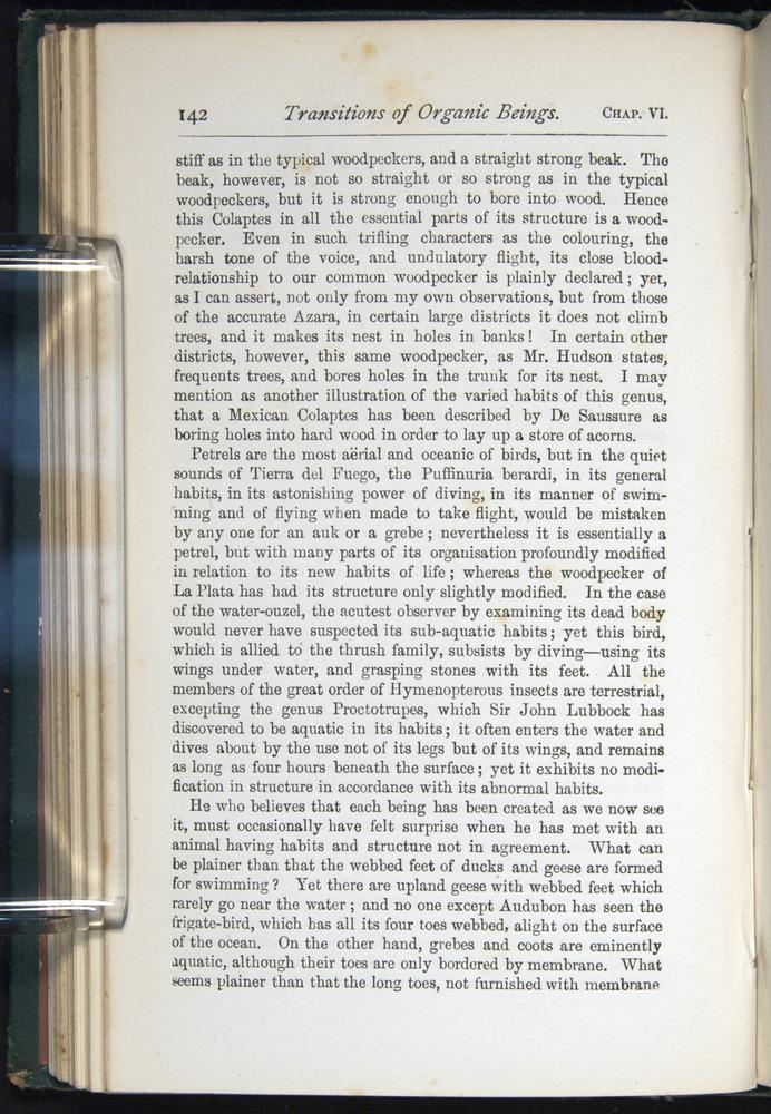 Image of Darwin-F401-1876-142