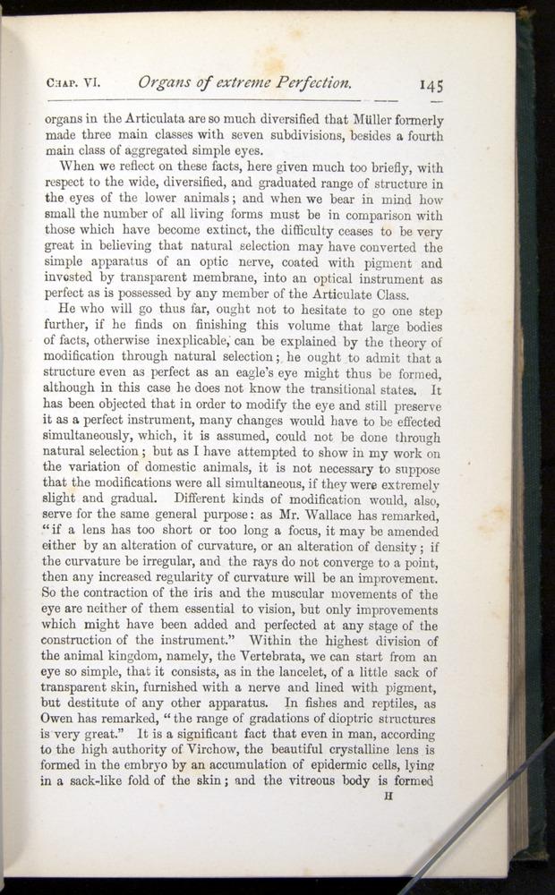 Image of Darwin-F401-1876-145