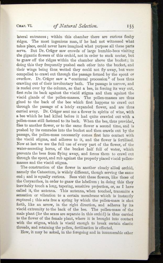 Image of Darwin-F401-1876-155