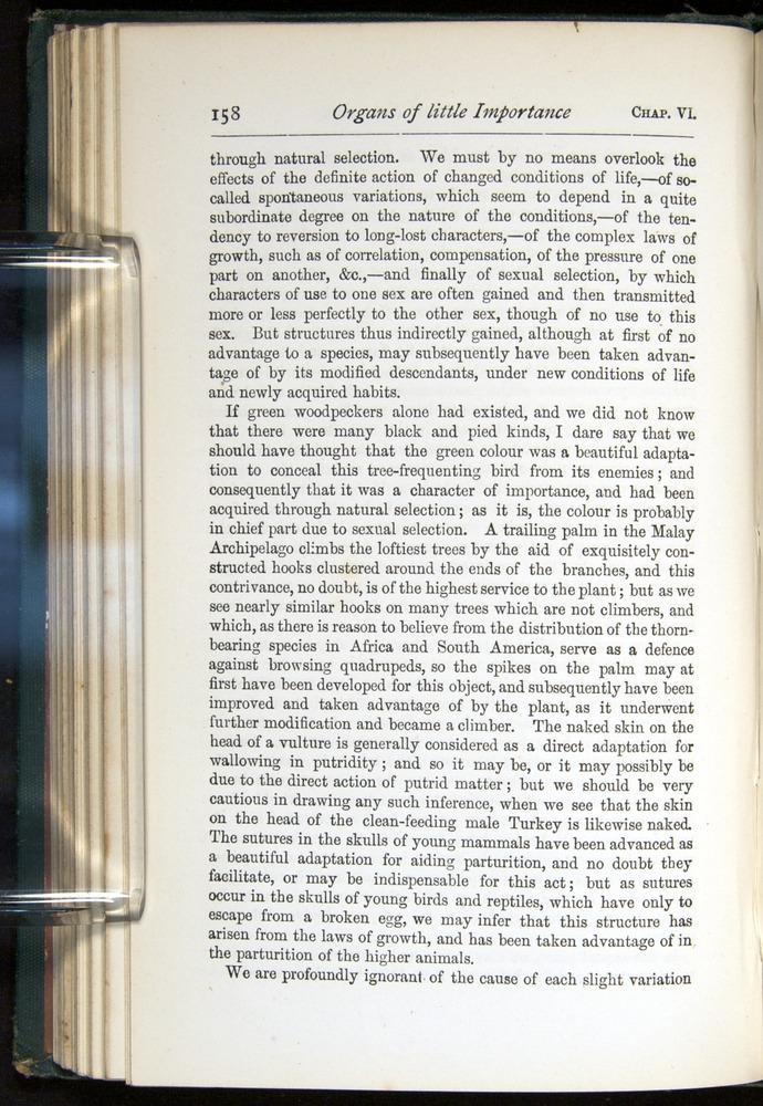 Image of Darwin-F401-1876-158