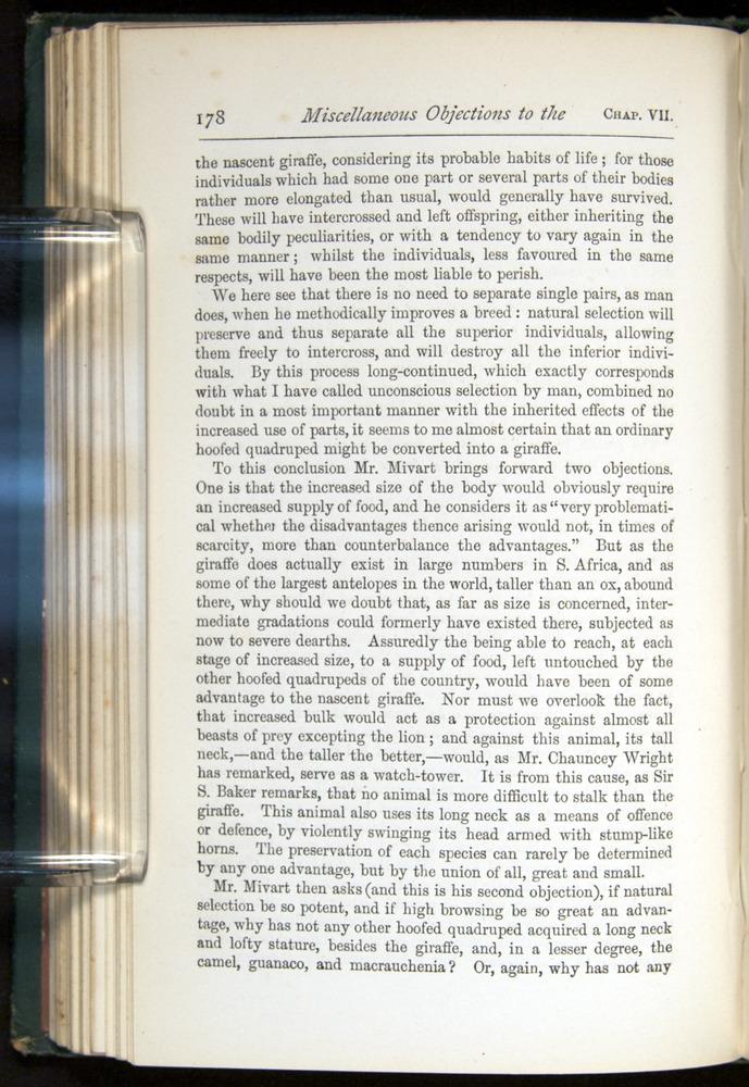 Image of Darwin-F401-1876-178