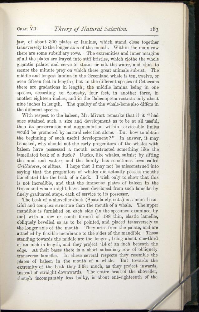 Image of Darwin-F401-1876-183