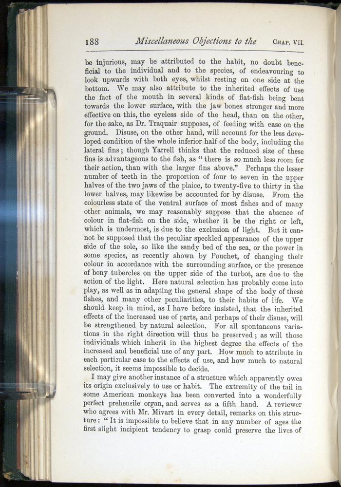 Image of Darwin-F401-1876-188