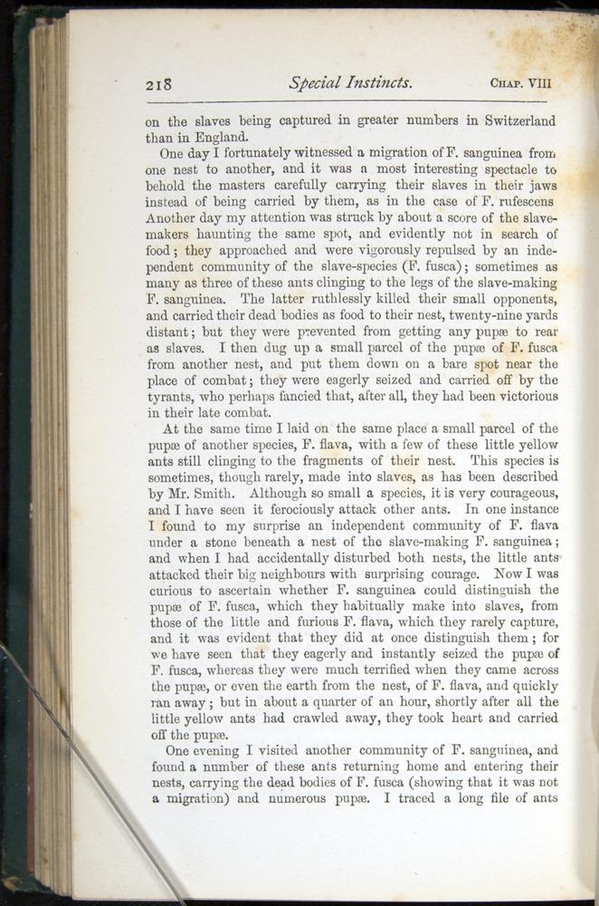 Image of Darwin-F401-1876-218
