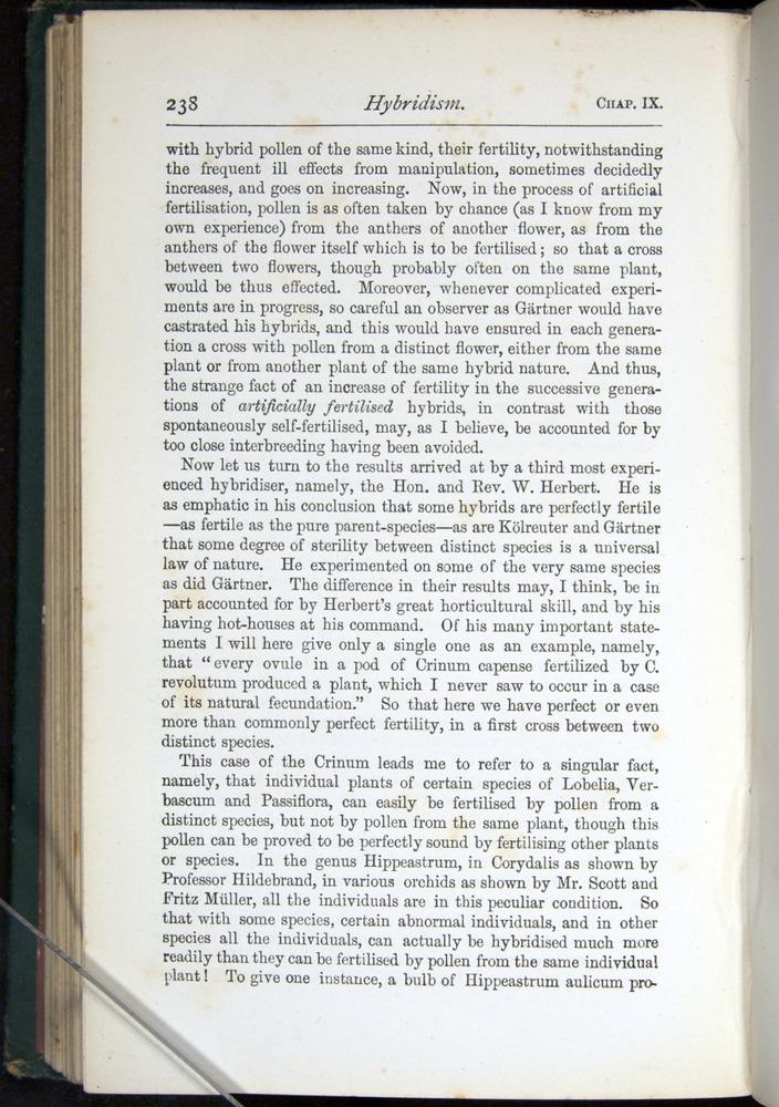 Image of Darwin-F401-1876-238
