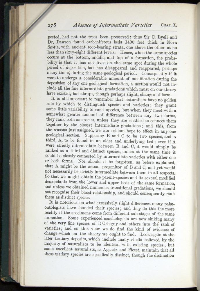 Image of Darwin-F401-1876-278