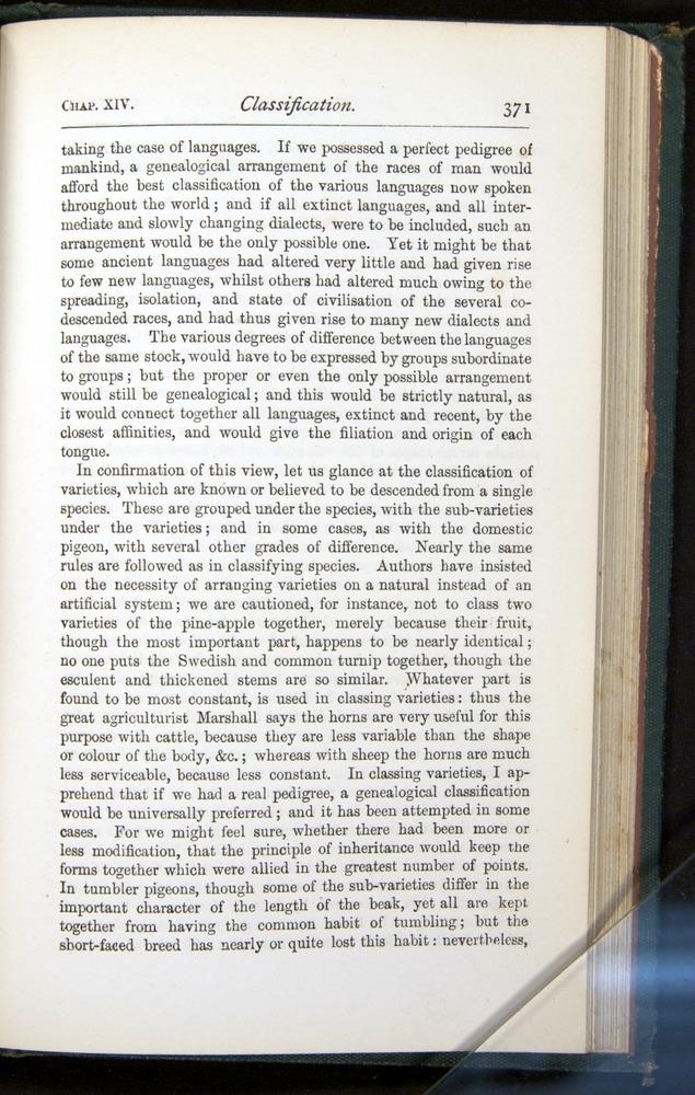 Image of Darwin-F401-1876-371
