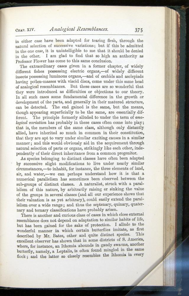 Image of Darwin-F401-1876-375