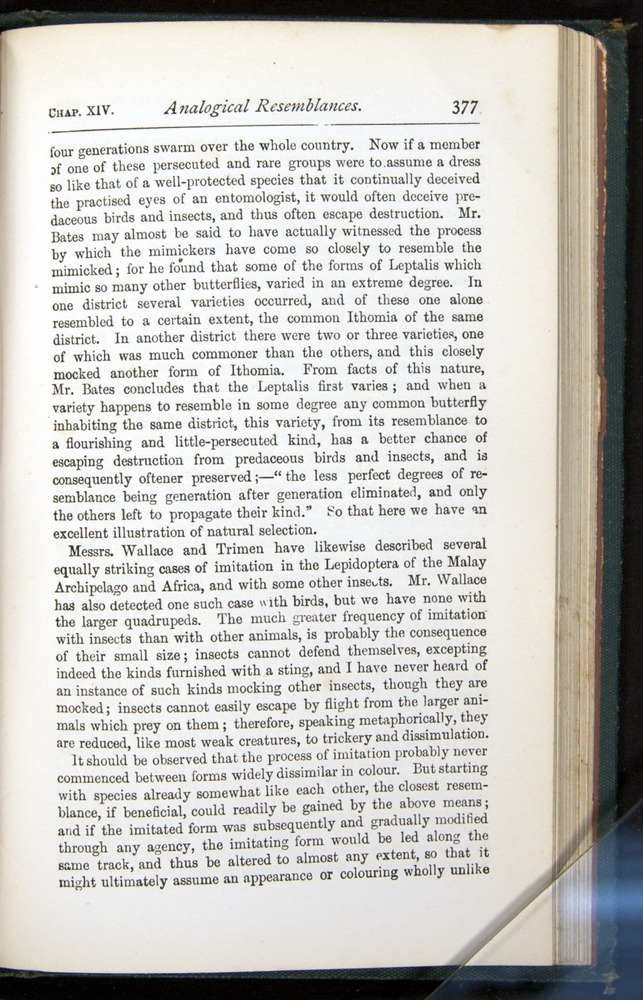 Image of Darwin-F401-1876-377