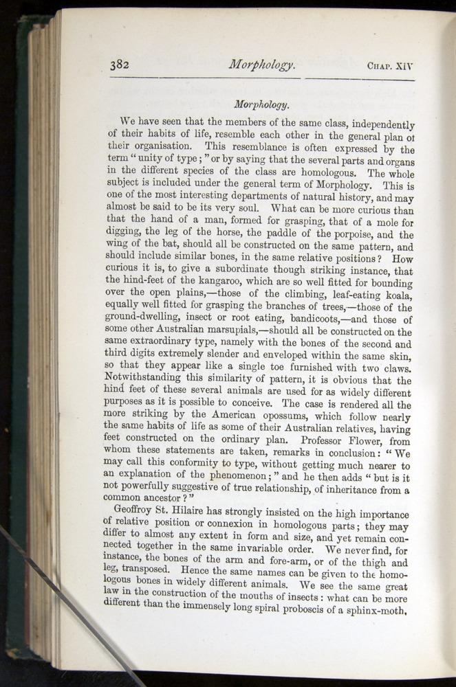 Image of Darwin-F401-1876-382