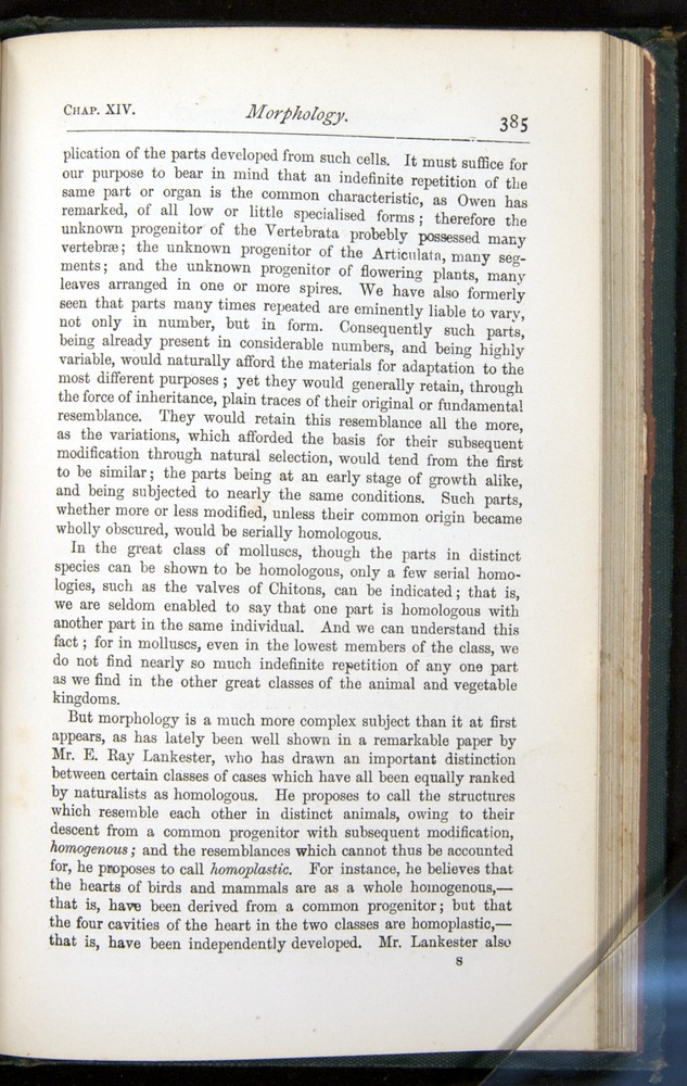 Image of Darwin-F401-1876-385