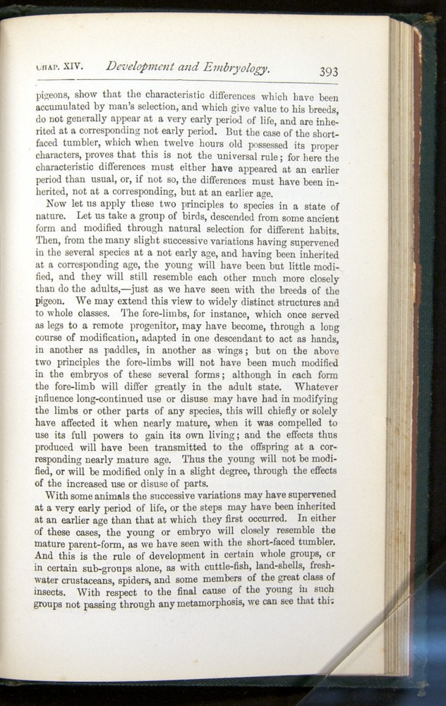 Image of Darwin-F401-1876-393