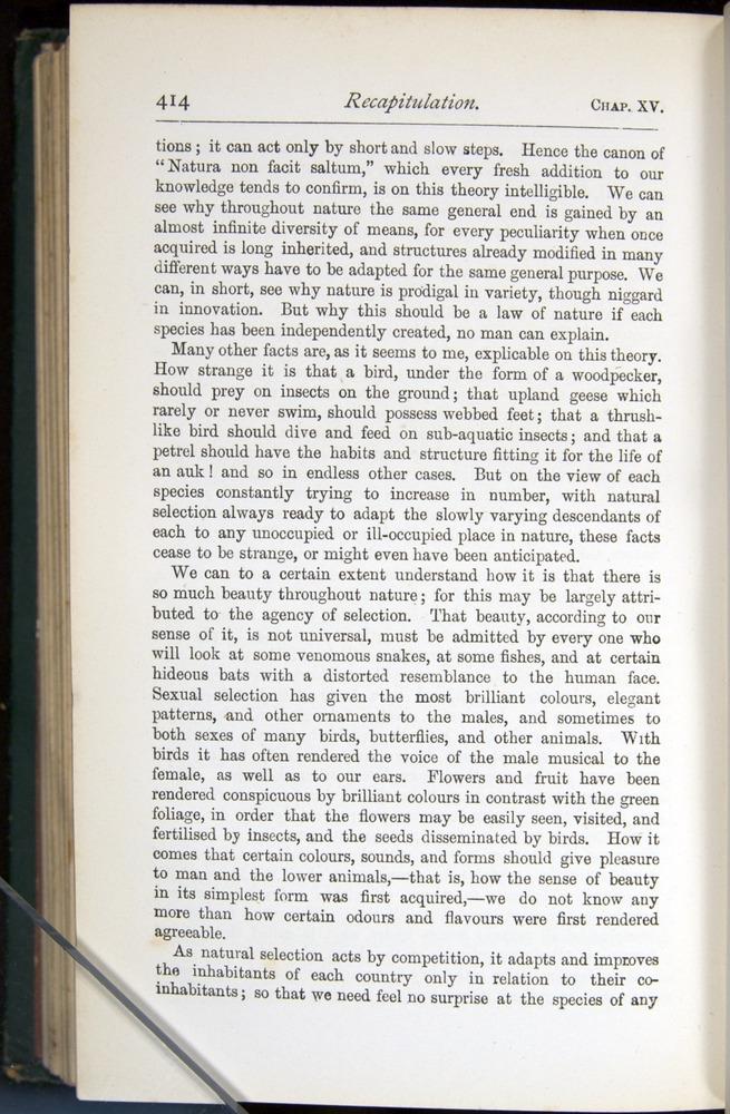 Image of Darwin-F401-1876-414
