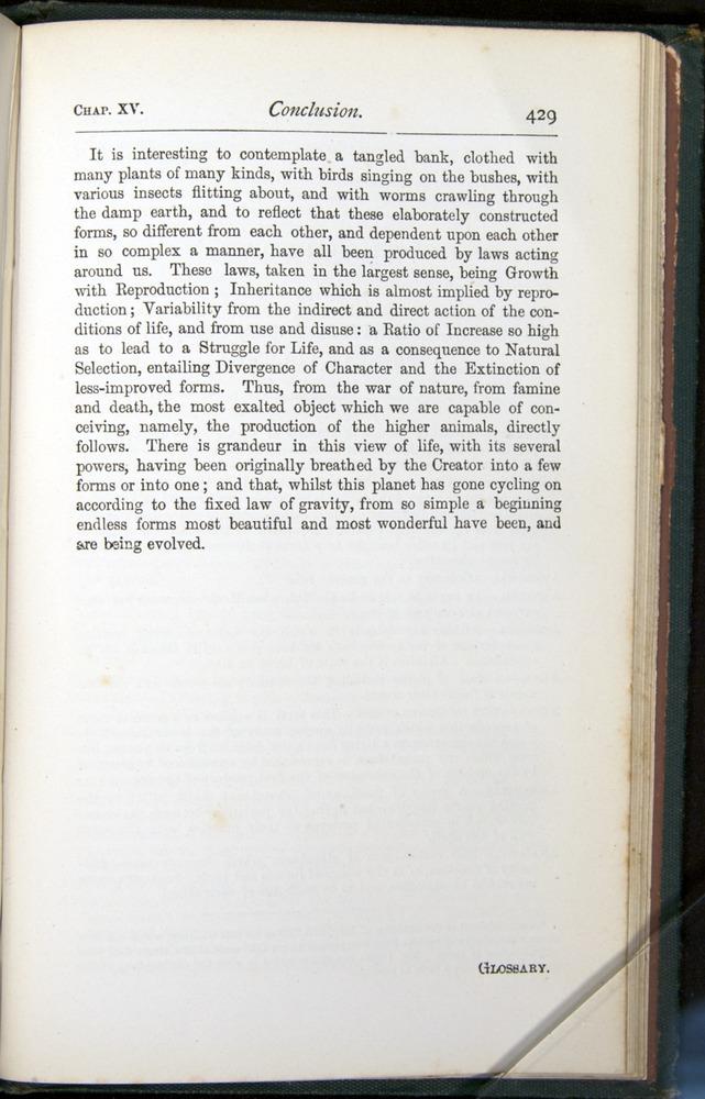 Image of Darwin-F401-1876-429