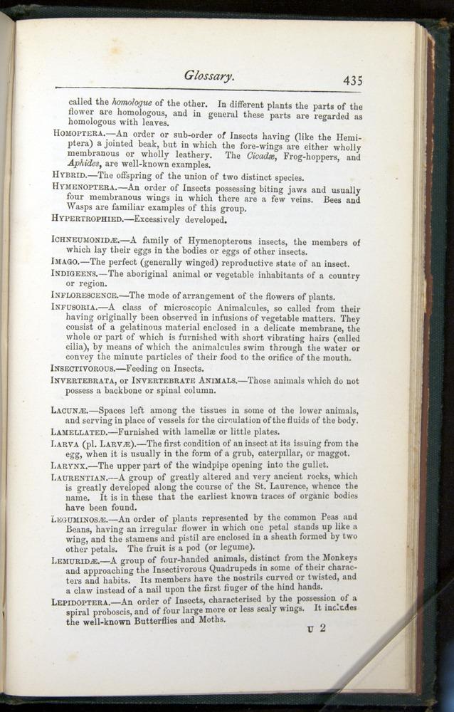 Image of Darwin-F401-1876-435