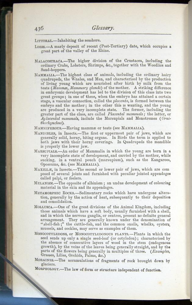 Image of Darwin-F401-1876-436