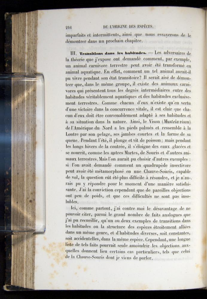 Image of Darwin-F656-1866-00216