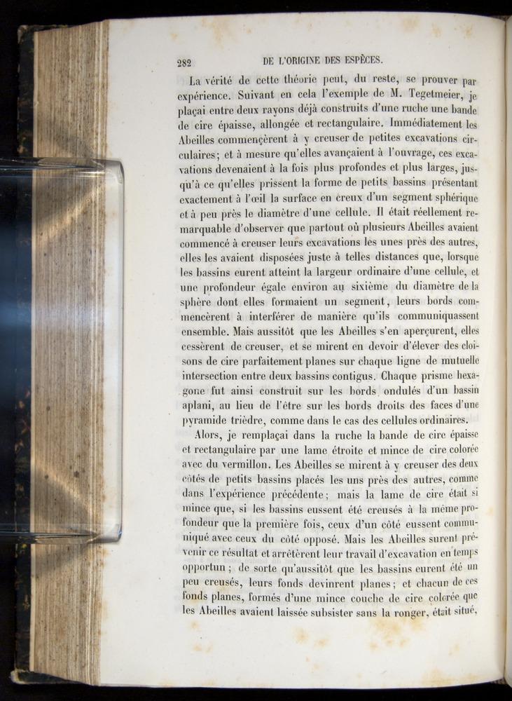 Image of Darwin-F656-1866-00282