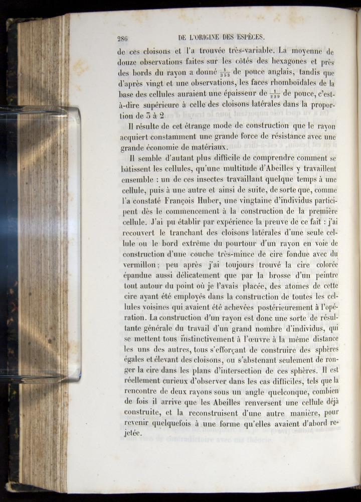 Image of Darwin-F656-1866-00286