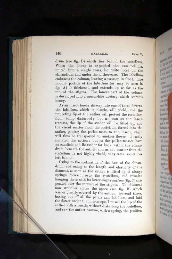 Image of Darwin-F803-1882-140