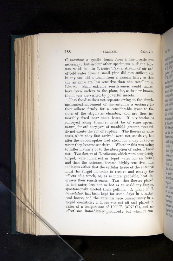 Image of Darwin-F803-1882-188