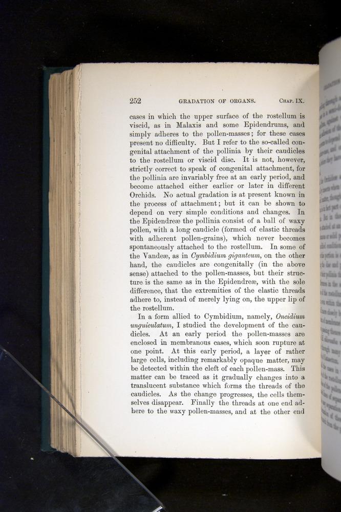 Image of Darwin-F803-1882-252