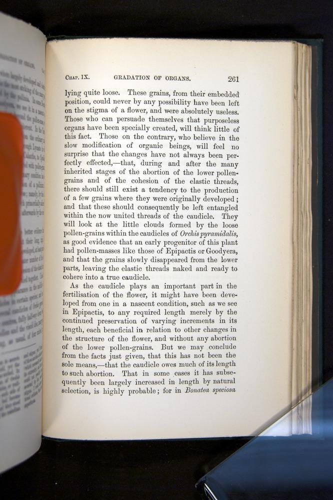 Image of Darwin-F803-1882-261