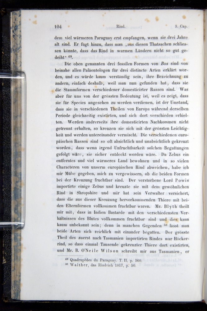 Image of Darwin-F914.1-1868-00104
