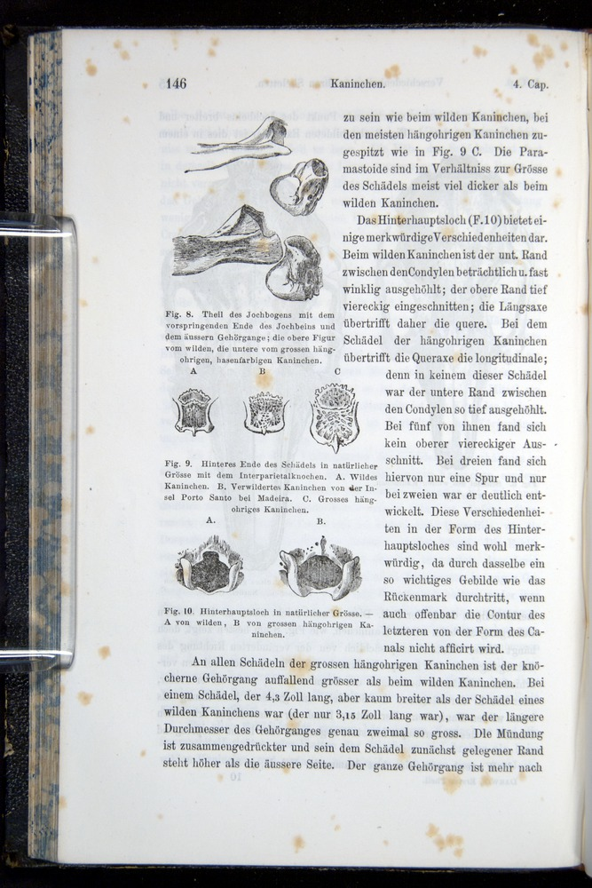 Image of Darwin-F914.1-1868-00146
