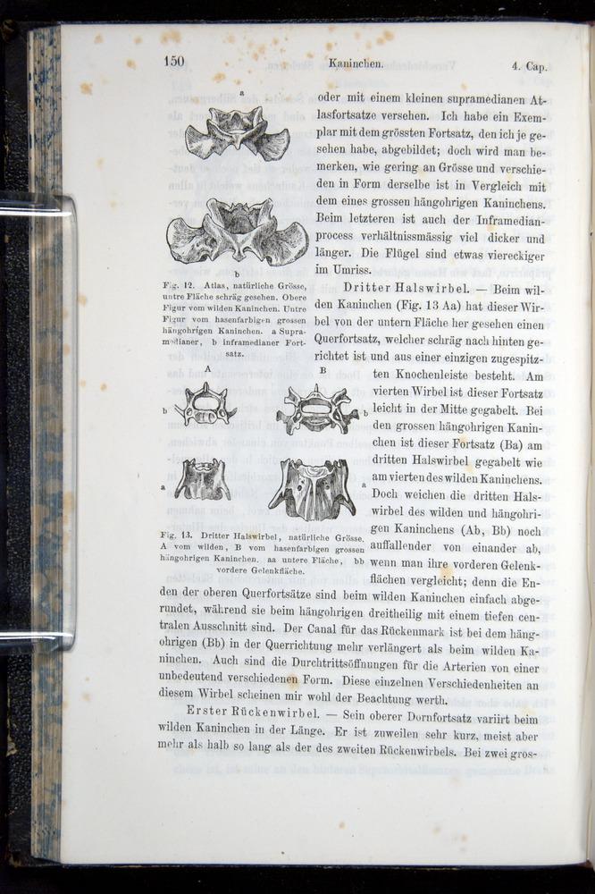 Image of Darwin-F914.1-1868-00150