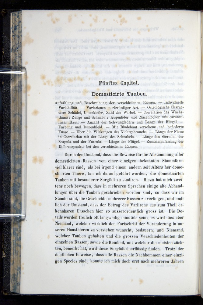 Image of Darwin-F914.1-1868-00162
