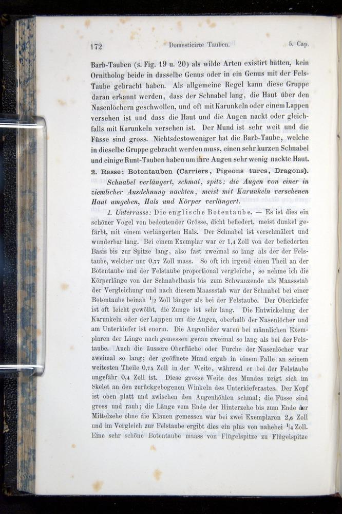 Image of Darwin-F914.1-1868-00172