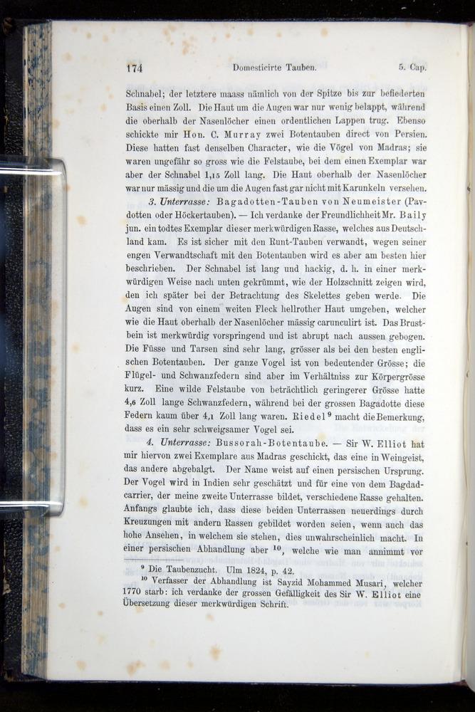 Image of Darwin-F914.1-1868-00174