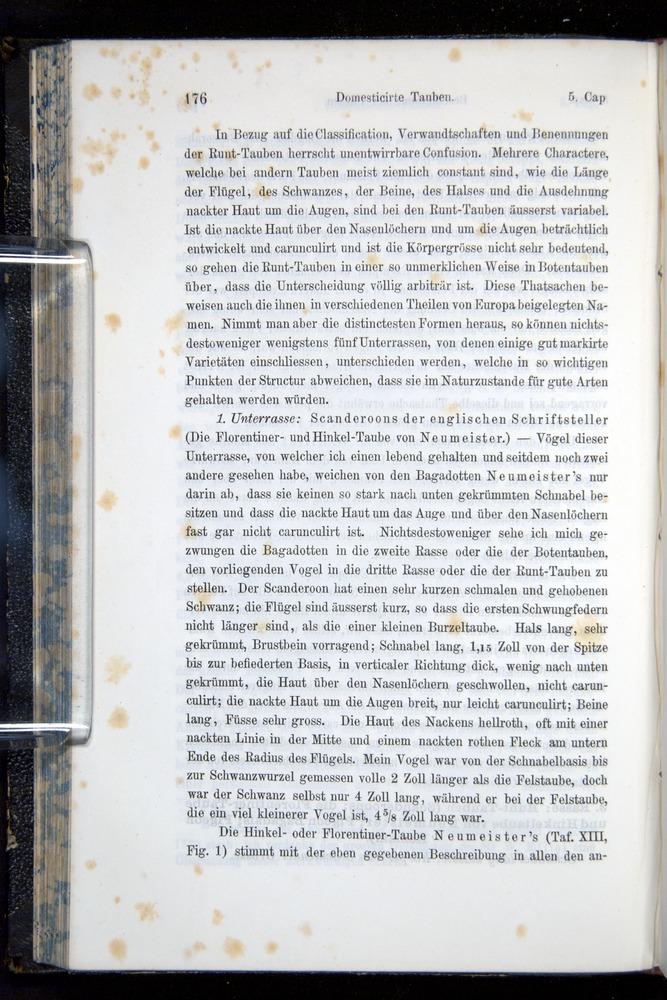 Image of Darwin-F914.1-1868-00176